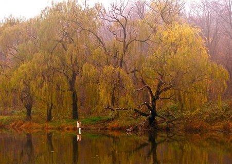 Lake Artemesia Fall