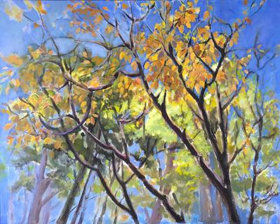 Through Dogwood Branches