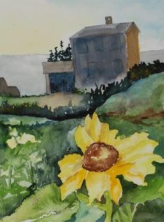MONHEGAN FLOWERS