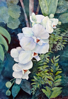 Rainforest Orchids